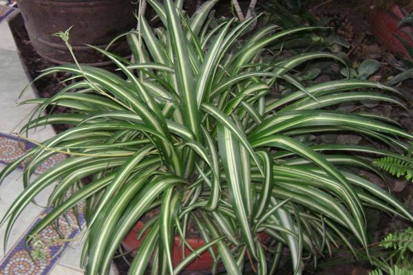 A 6 legjobb légtisztító szobanövény