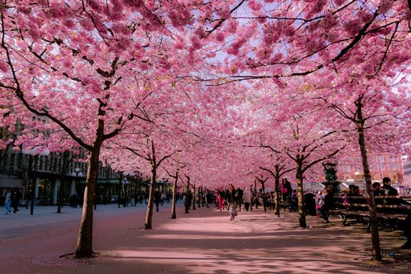 A legszebb tavaszi sétányok! - Lélekmelengető képsorozat