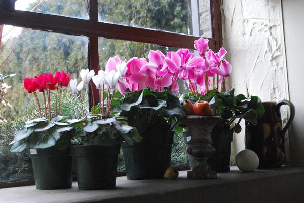 5 fantasztikus tavaszcsalogató lakásdekor ötlet
