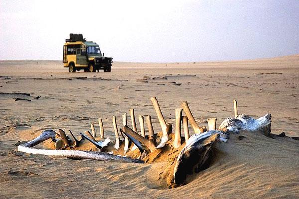 A hátborzongató csontvázak és hajóroncsok borította Skeleton part