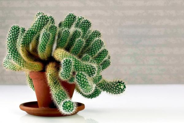 Ez a 10 növény bevonzza otthonodba a pozitivitást!