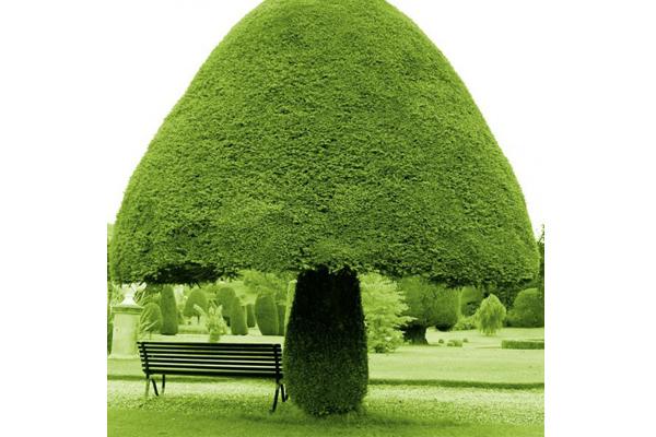 13 lélegzetelállító fafajta, amiről azt hihetnénk nem is igaziak