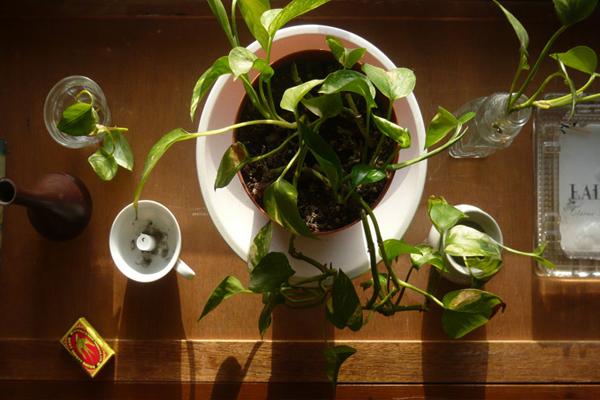 Helyezd el otthonodban ezt a 10 csodás növényt és nem bánod meg!