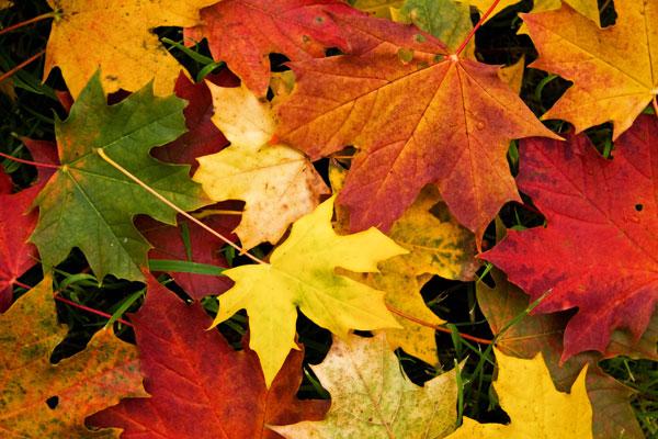 Ez az 5 mágia ősszel a leghatásosabb!