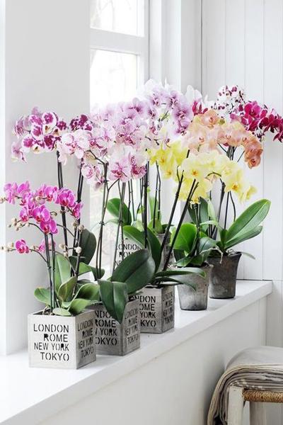 Megmutatjuk a 8 legnépszerűbb Feng Shui virágszimbólum titkát