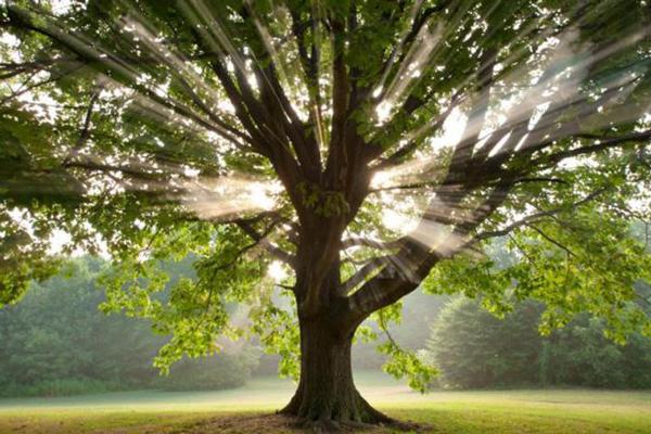 Tudd meg, hogyan segítik elő a fák a gyógyulást!