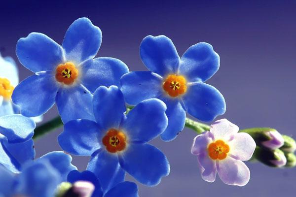 Próbáld ki a 4 virágvarázslat valamelyikét a szép szerelmi életért!