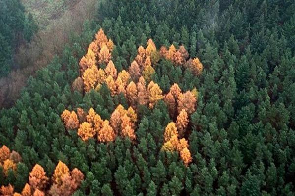 10 erdő, amihez megoldatlan rejtélyek kapcsolódnak