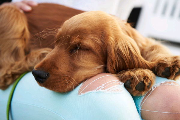 3 lecke, amit a házi állataid tanítanak meg neked