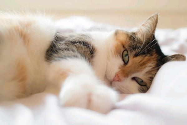 Figyeld, mit tanít a macskád a buddhizmusról!