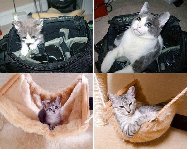 Tündéri cicák, akik szerint az idő megáll