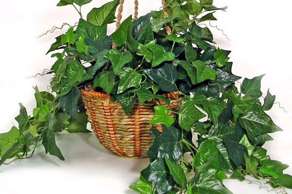 Íme, az 5 legjobb nyugtató és légtisztító növény