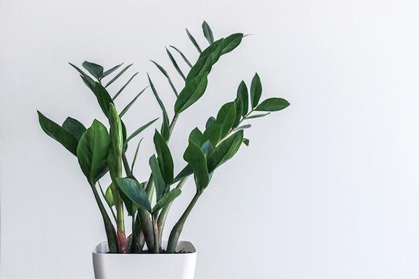 Ezek a növények pompásan érzik magukat a fürdőben