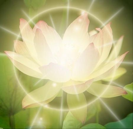 lotusz